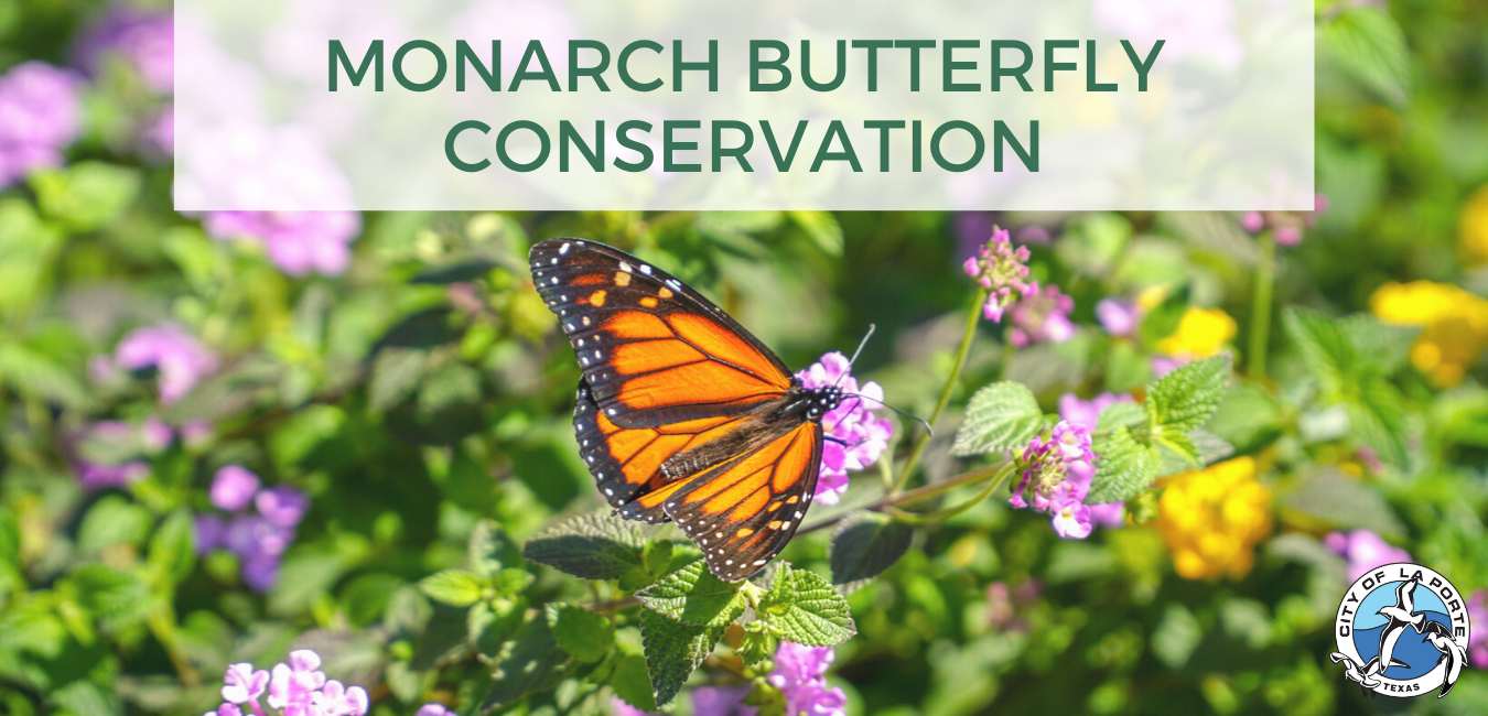 Monarch Butterfly Conservation